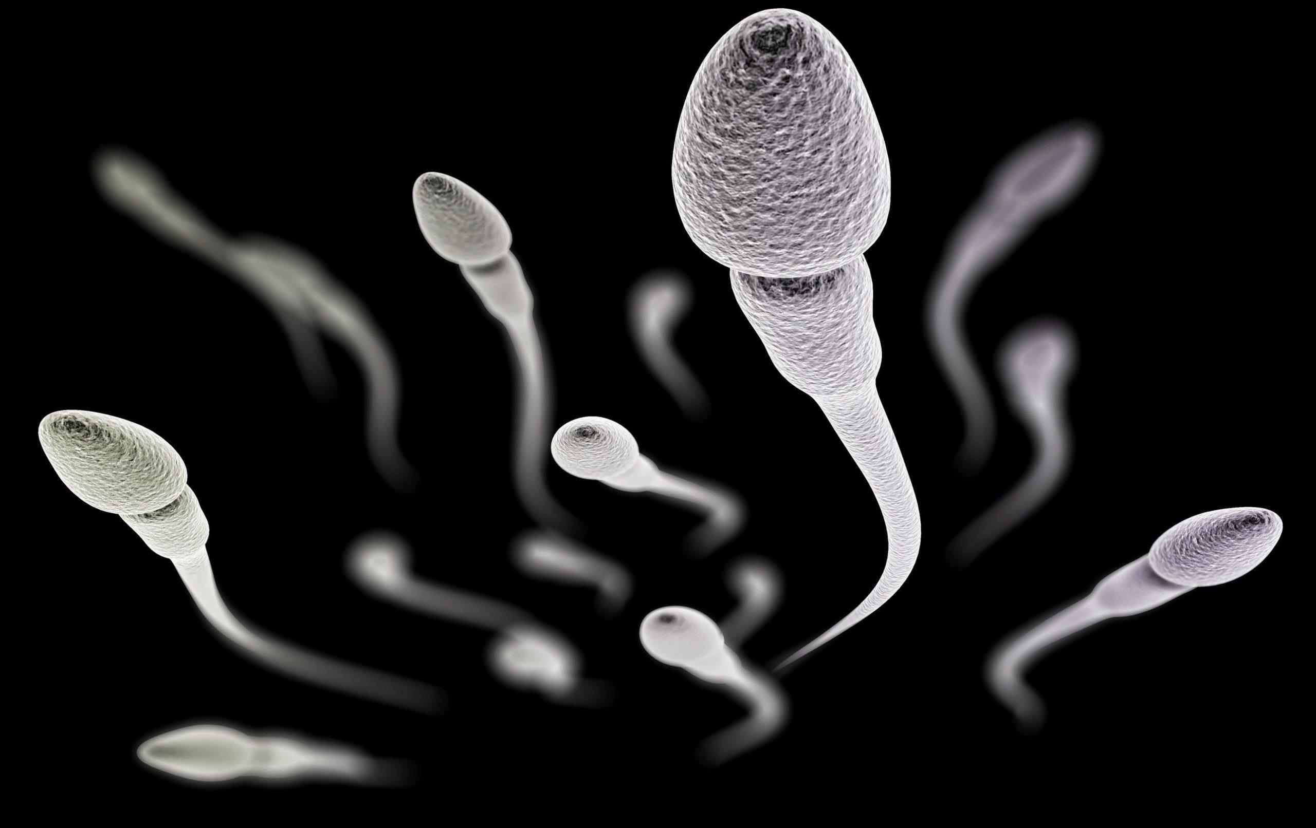 Lee más sobre el artículo Esperma vago y/o lento: causas y tratamiento